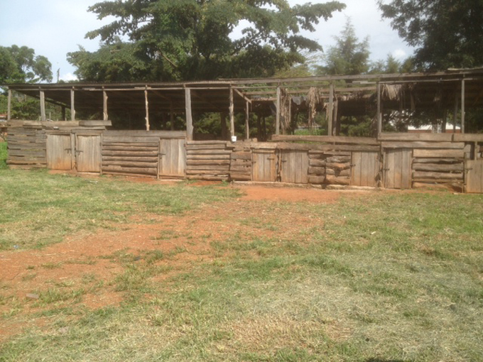 Investing in Poultry Farming in Uganda